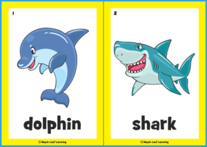 Aquarium Animal Flashcards