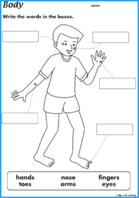 Body Parts Resources | Maple Leaf Learning Library