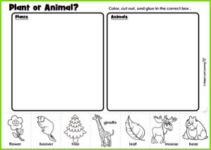 Plant or Animal? Activity